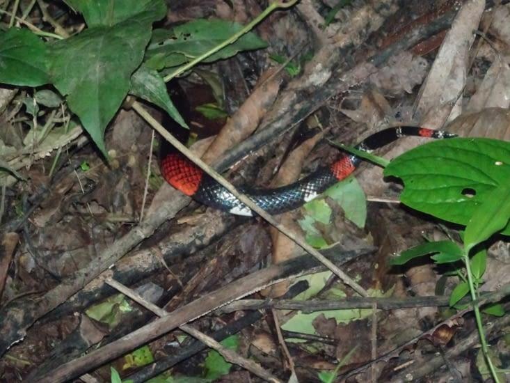 Un petit bout de serpent un peu dangeureux ^^