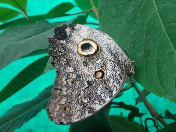 Et les papillons