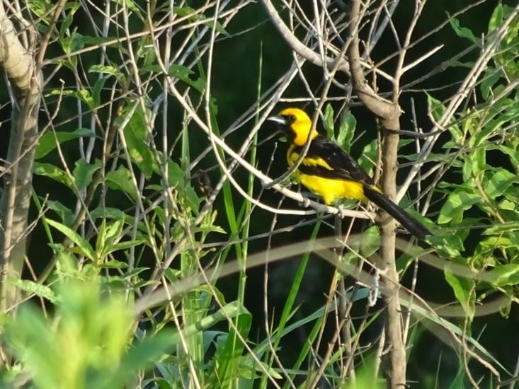Le safari photo des oiseaux