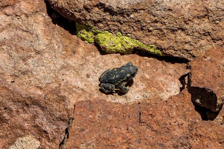 La route des salars - une grenouille dans un canyon du Laguna Quisquiro