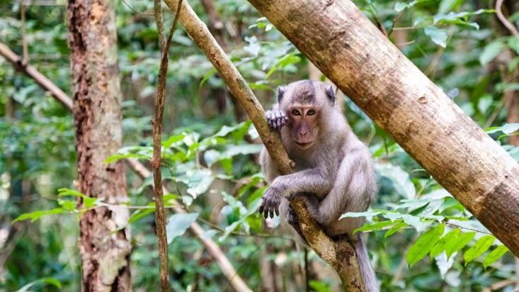 Le petit singe 🐒