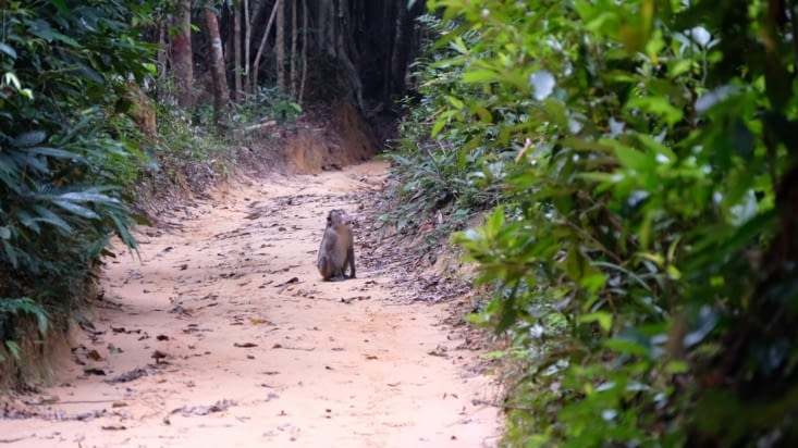 Un singe sur notre route !