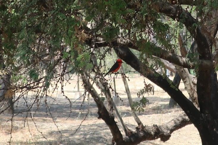 Un oiseau rouge
