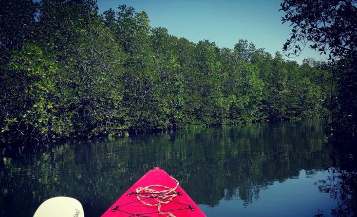 Dans la mangrove.
