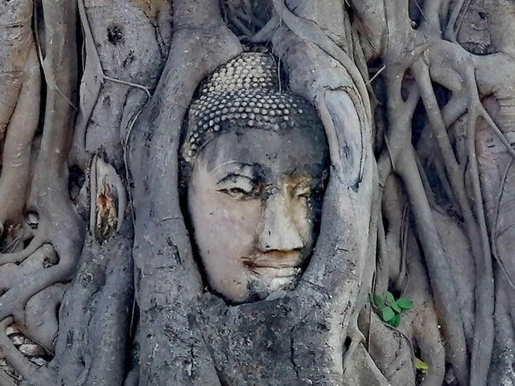 Les racines du bouddhisme.