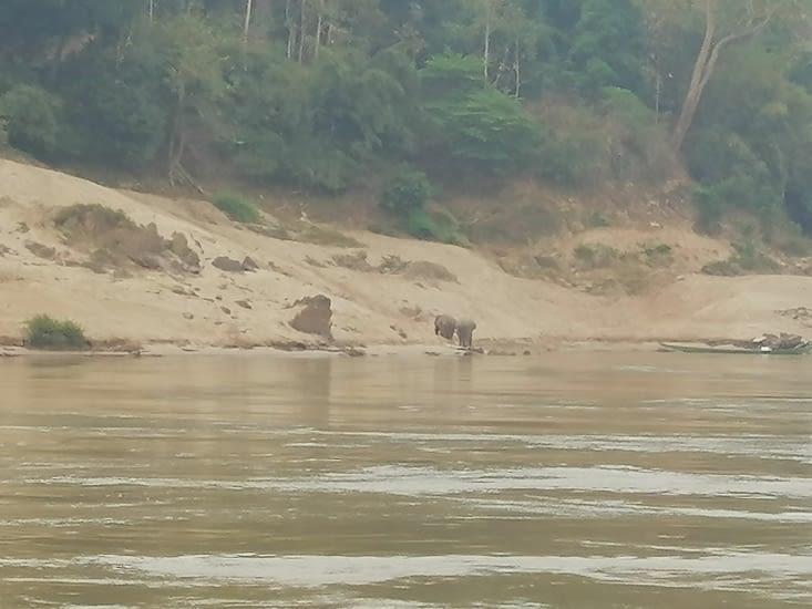 Les éléphants prennent leur bain