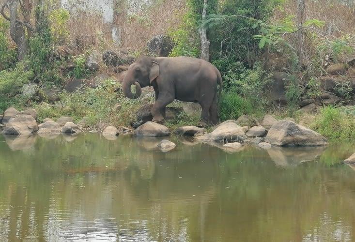 Un éléphant, ça trompe énormément.