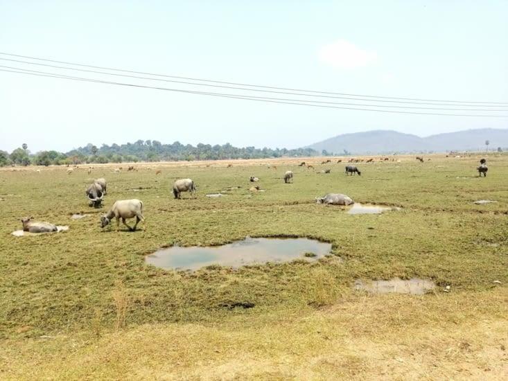 La plaine aux bœufs.