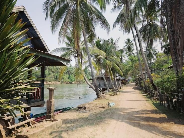 Chemin ombragé par les cocotiers.