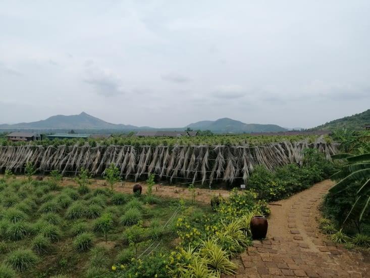 La Plantation de poivre.