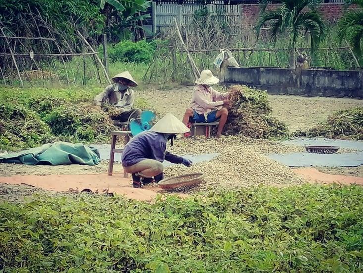 Travailler pour des cacahuètes.