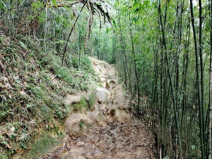 Boue et bambou.