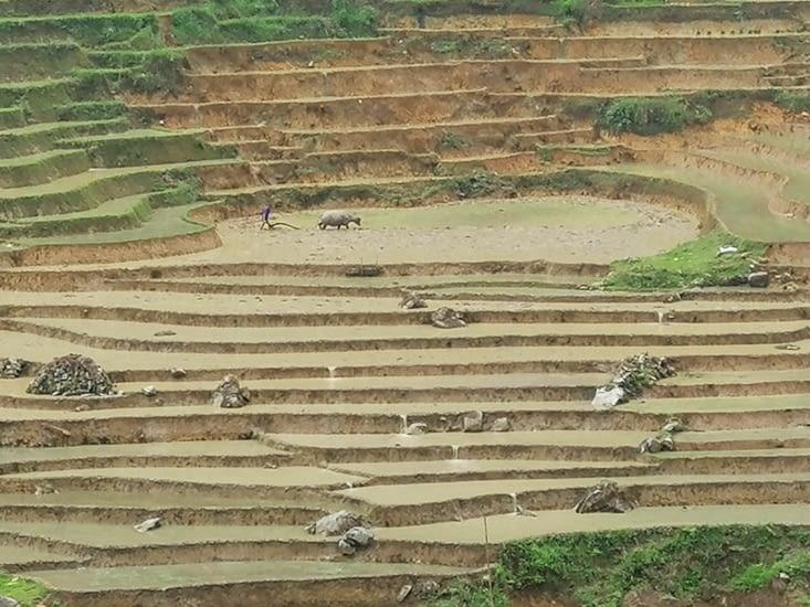 Le travail difficile des rizières