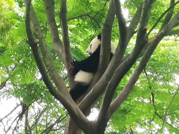 Auprès de mon arbre.