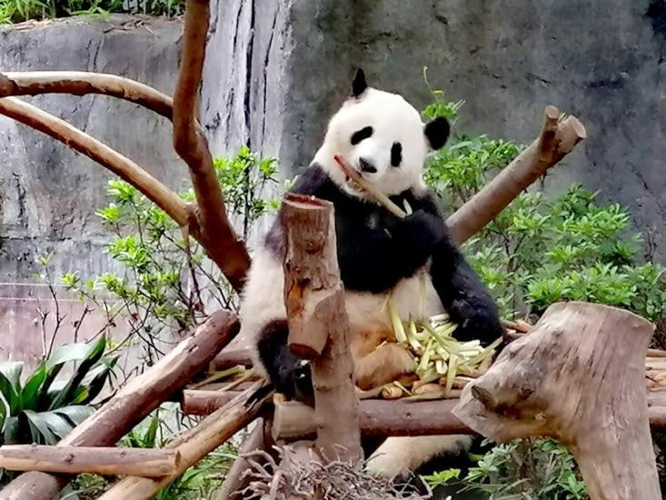 Le goût de bambou.