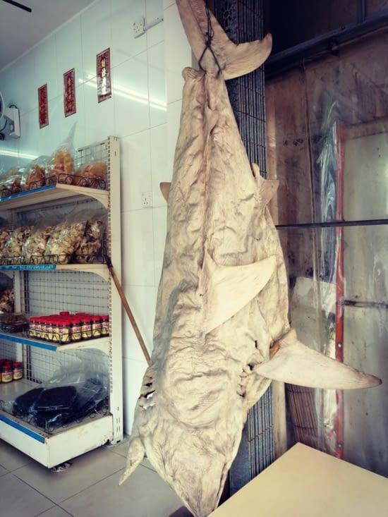 La peau de requin.