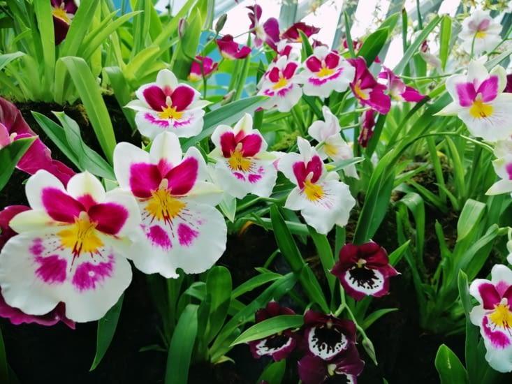 Bouquet d'orchidées.