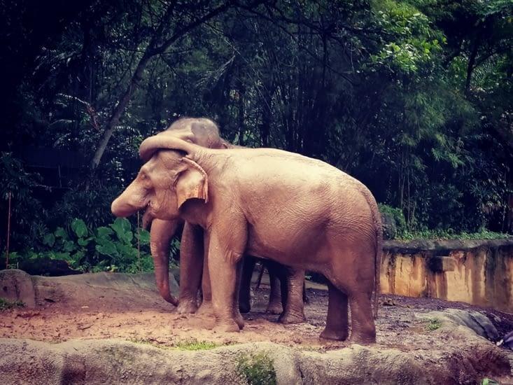 Câlin éléphantesque.