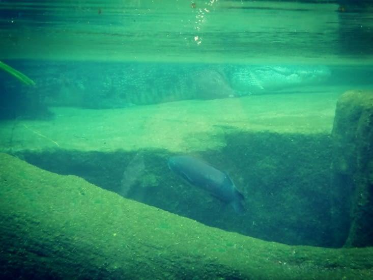 Sous la surface.
