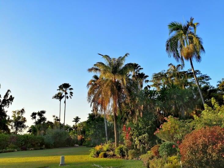 Soleil couchant au jardin botanique.