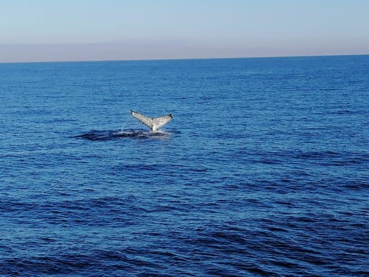 Le salut de la baleine
