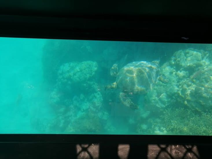 Turtle wash