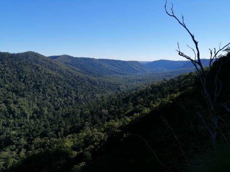 Les vallons du Lamington National Park.