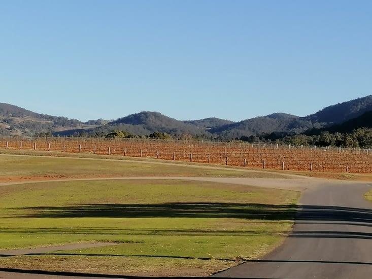 Les vignes de la Hunter Valley.