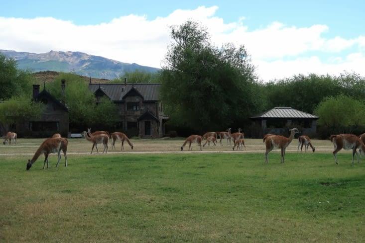 L'accueil des Lamas