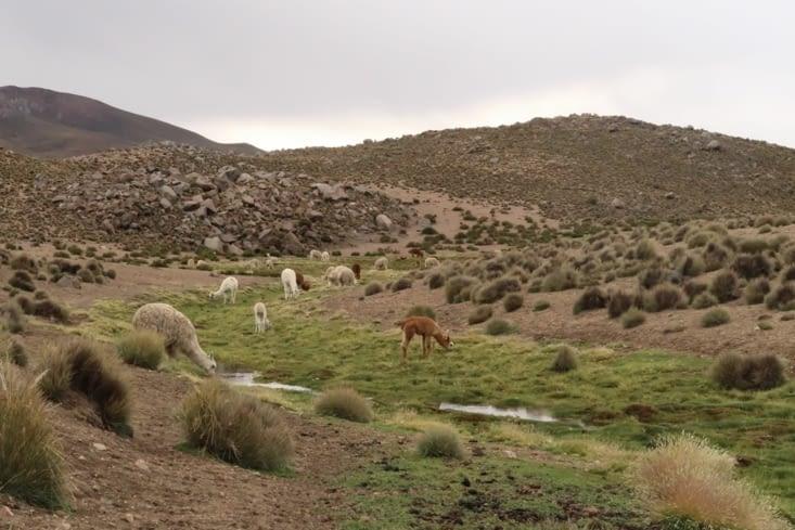 Alentours de Parinacota