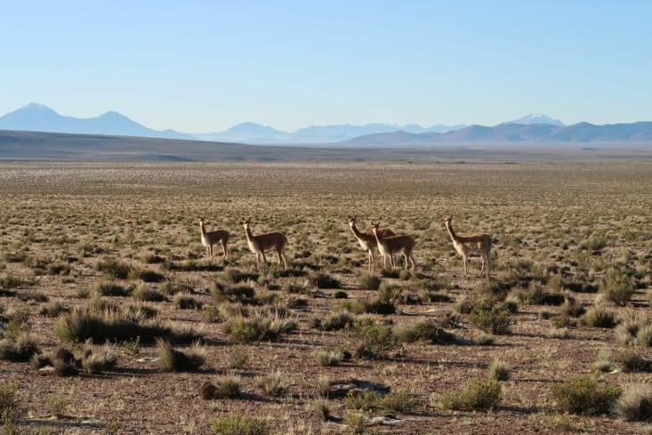Reserva nacional Las Viñucas