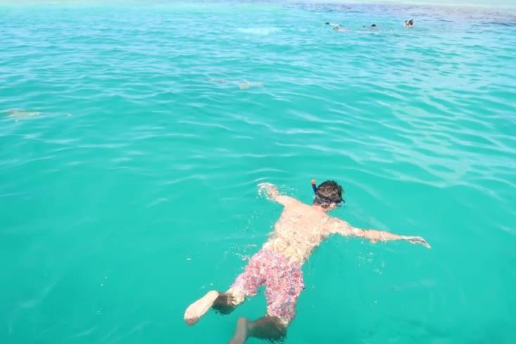 Snorkeling avec les requins