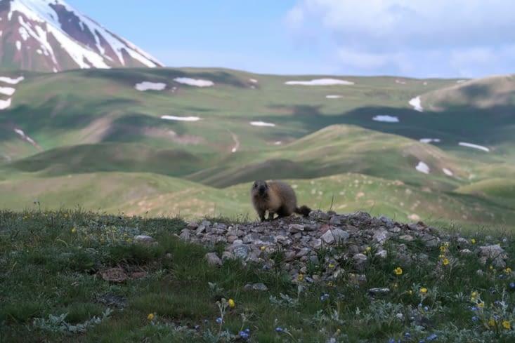 Bébé marmotte sur la randonnée sur Pic Lénine