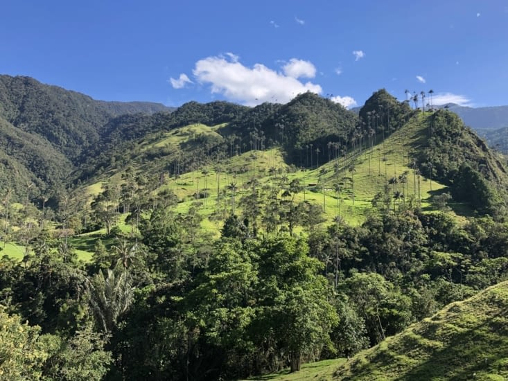 Vallée de Cocora / Cocora valley
