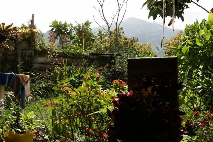Le jardin / The garden
