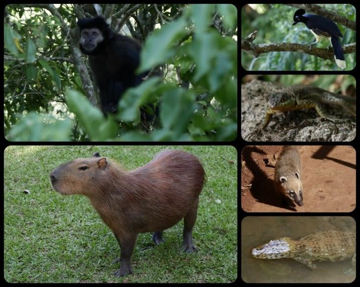 Les belles petites bêtes (ou moins petites) qu'on a rencontrées / The cute beasts we saw