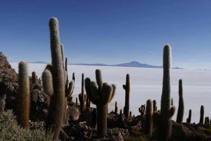 Cactus island