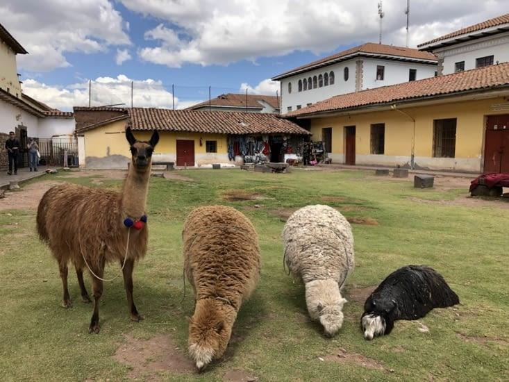 Lamas et Alpagas 🦙