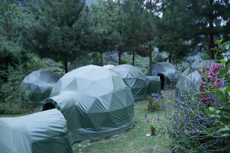 Jungle domes