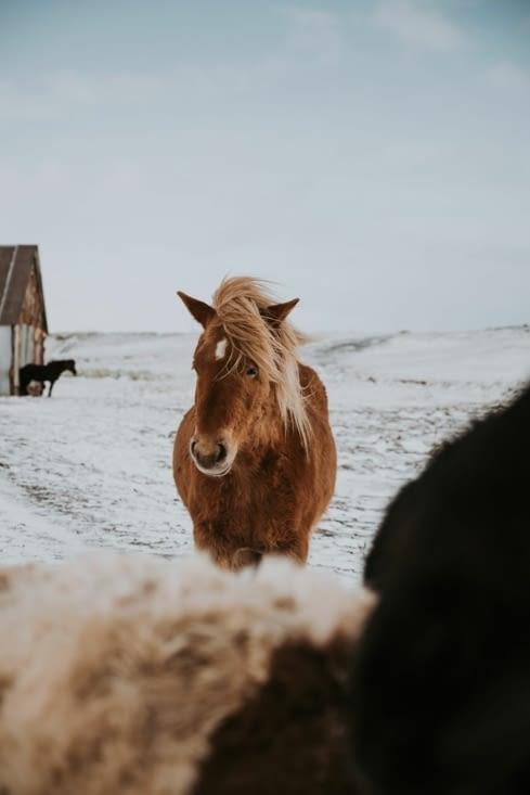 Entre Selfoss et Þingvellir