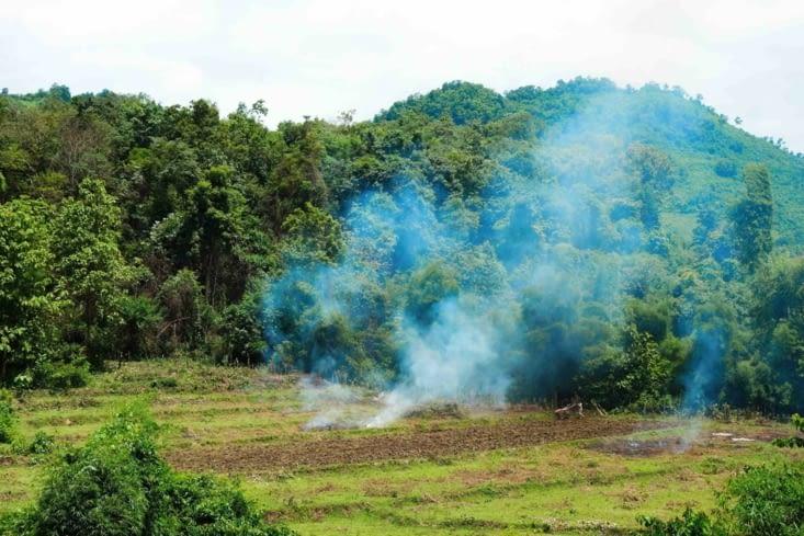 Le brûlis des champs / Burning of rice fields