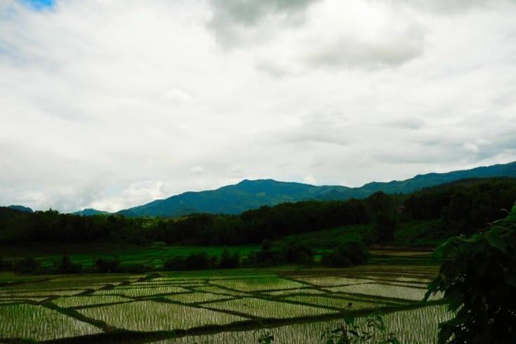 Rizière / Rice field