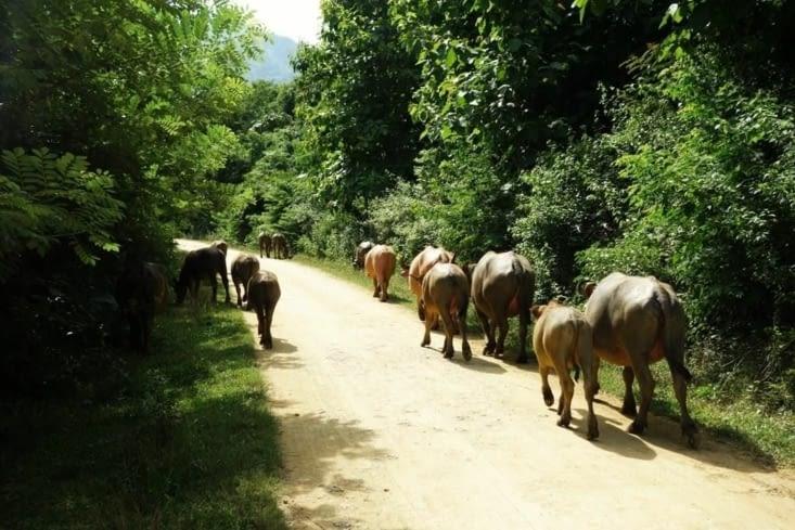 Troupeau de buffles / Herd of buffalo