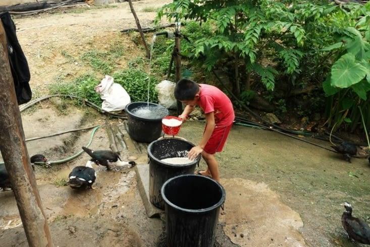 Rinçage du riz / rice washing