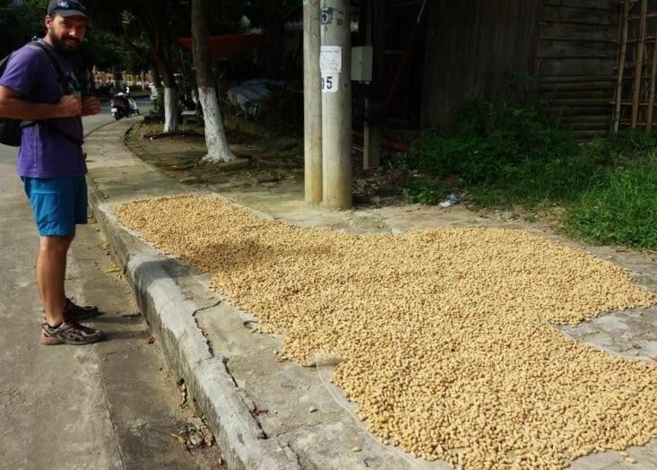 Cacahuètes en train de sécher dans la rue / Peanuts drying in the street