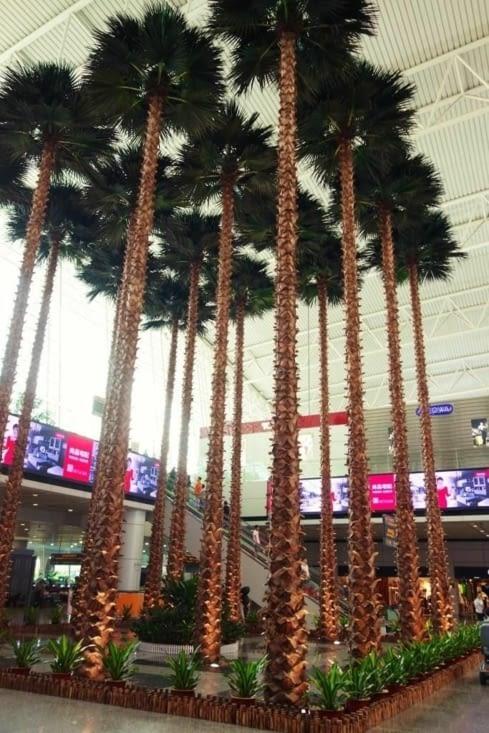 Les cocotiers dans l'aéroport / Coconuts trees inside the airport