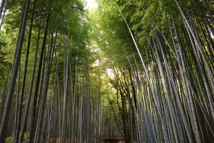 Bambouseraie / Bamboo forest