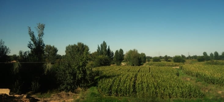 Vue depuis le train / View from the train