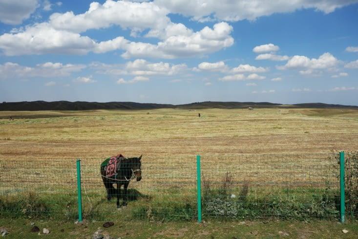 Champs lors de la récolte / Fields during harvesting time