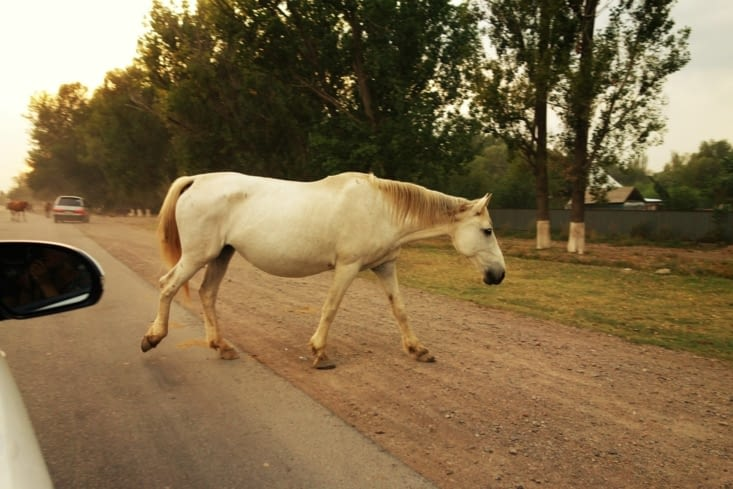 Attention chevaux / Be careful horse crossing !